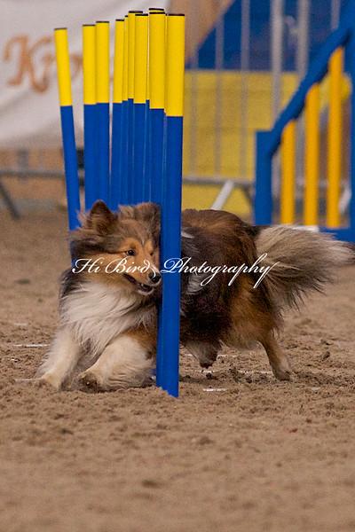 small dog day 2 1216.jpg