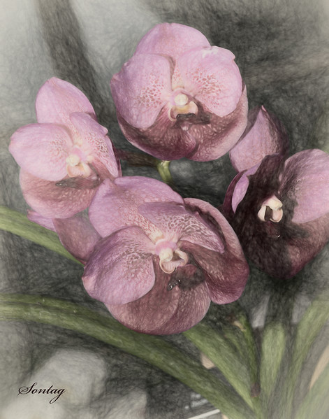 Flowers Artwork - Orchid