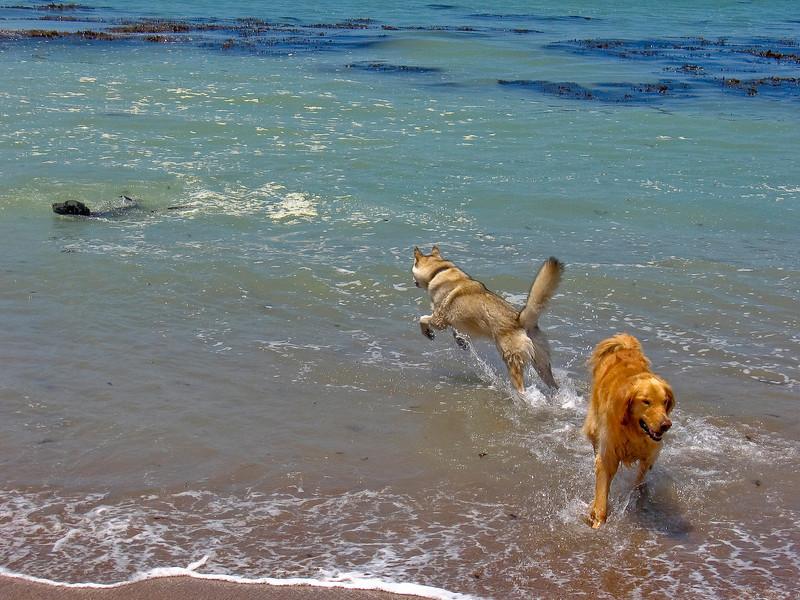 dogs-26.jpg