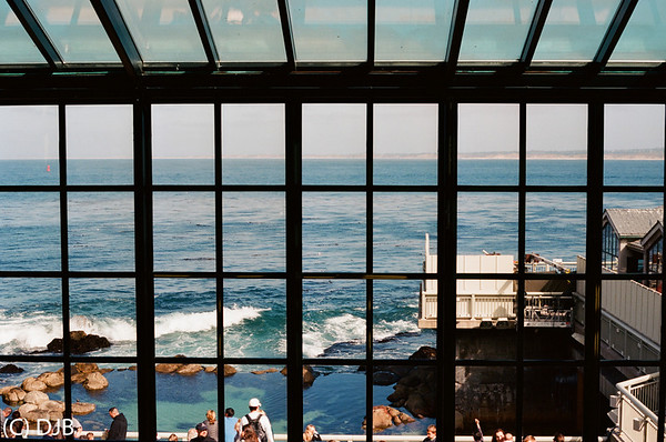 Monterey Bay 2013