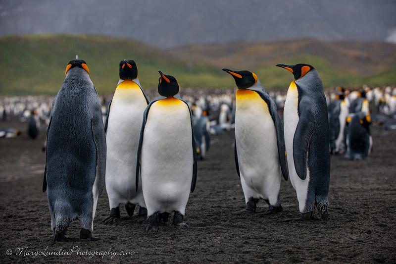 Antarctic-146