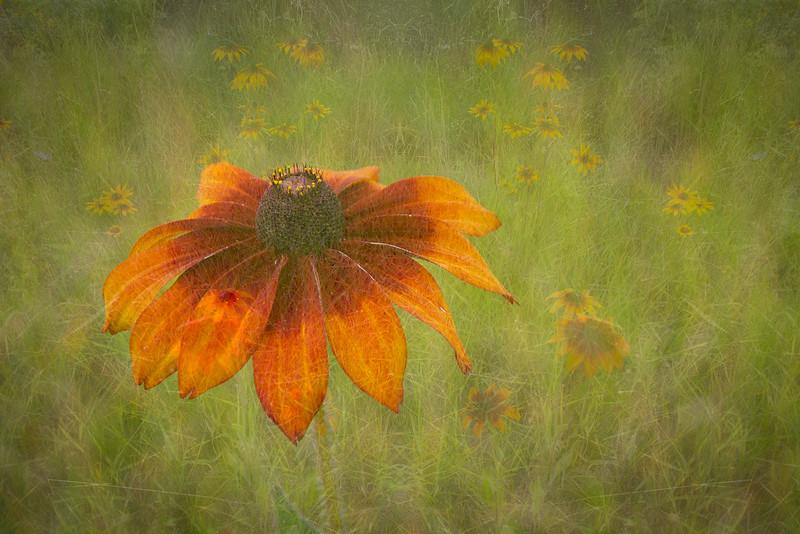 2015-08-14_Chris-Harris_Canon7D_1488-Edit.jpg