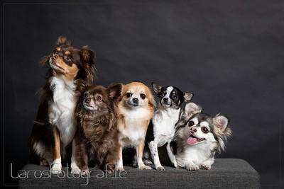 Mini hondjes