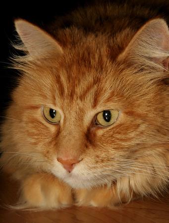 Smitten Kittens 2008