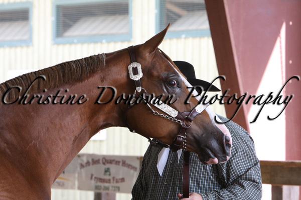 Halter Mares & Stallion