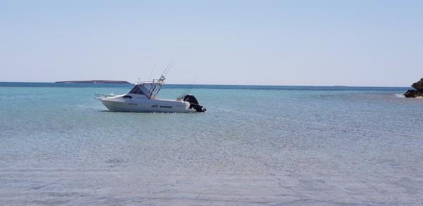Shark Bay cruising