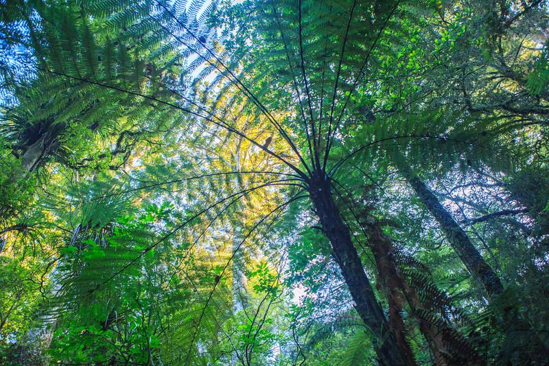 Fern in Rain Forest