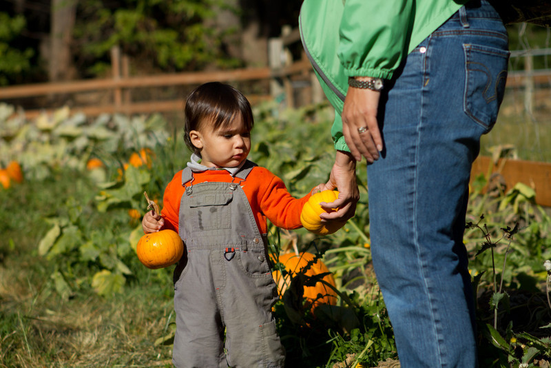 PumpkinPatch2012-241.jpg