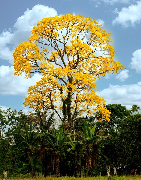 COSTA RICA  1 361LL.jpg