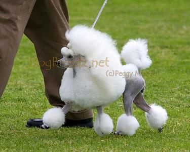 RHKC 2011 - Poodles Toy