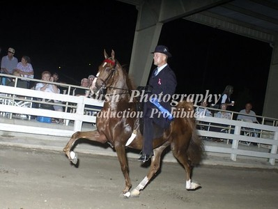 CLASS 14  SADDLEBRED  3 YRS & UNDER