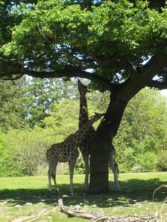 Woodland Park Zoo Seattle & Space Needle