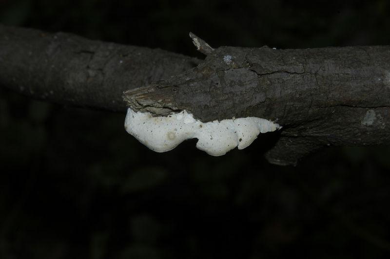 Mycology 138.jpg