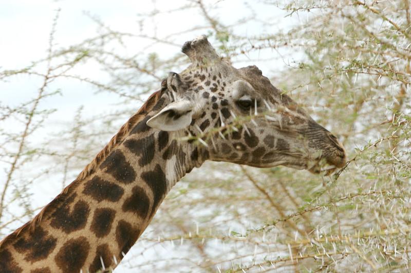Tanzania - 04.jpg