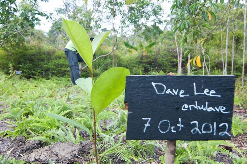 Borneo-Jungle-6775.jpg