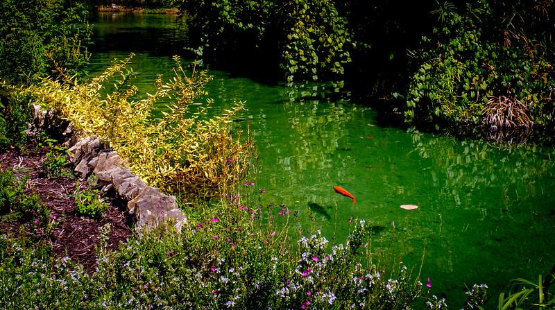 San Antonio Japanese Garden-5783.jpg