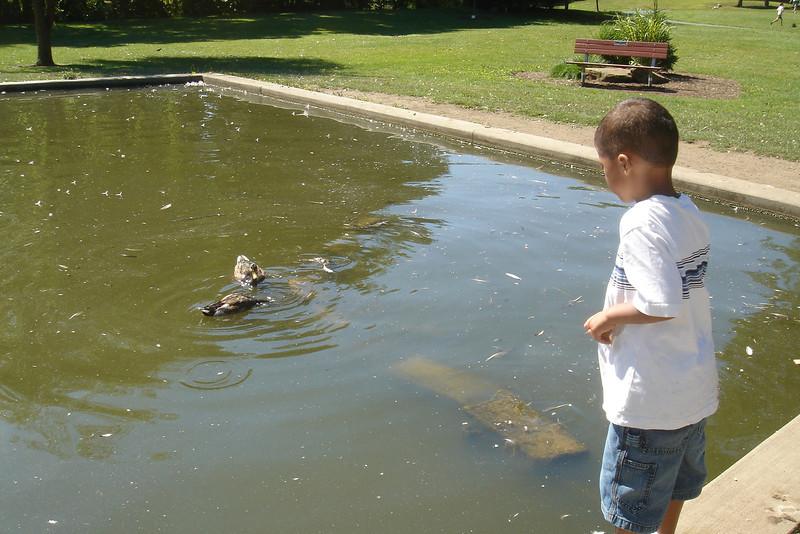 Edward IV feeding the ducks