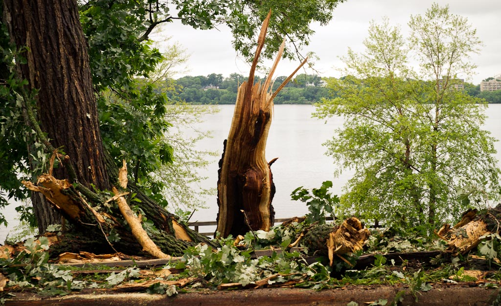 . What\'s left of a tree stands near Lake Calhoun in Minneapolis. (Photo: Ryan Coleman)