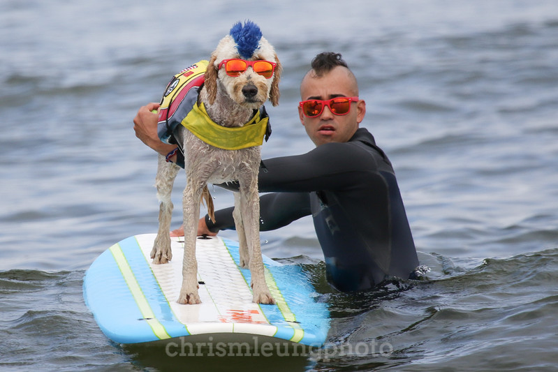 8/5/17: Derby and his human, Kentucky Gallahue, at the 2017 World Dog Surfing Championships at Pacifica State Beach in Pacifica, Ca by Chris M. Leung