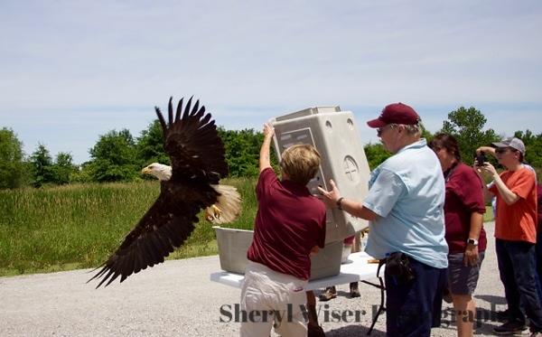 Eagle Release 06142018