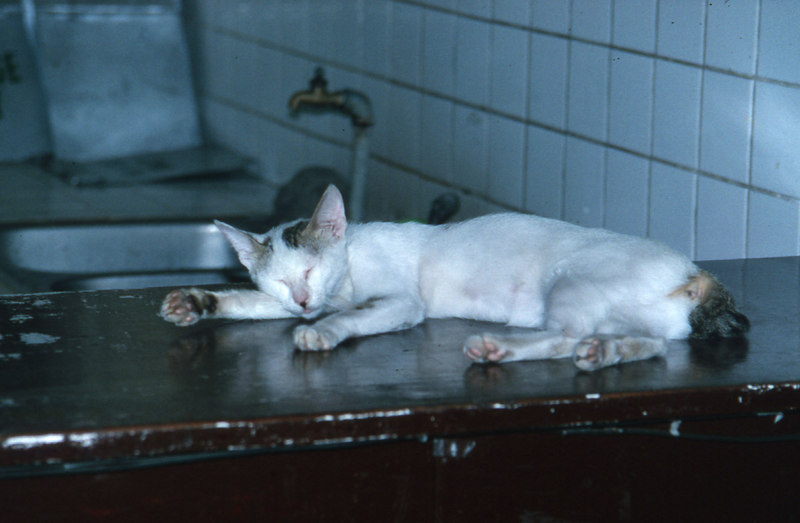 pampanga'94.cat in hosp.jpg