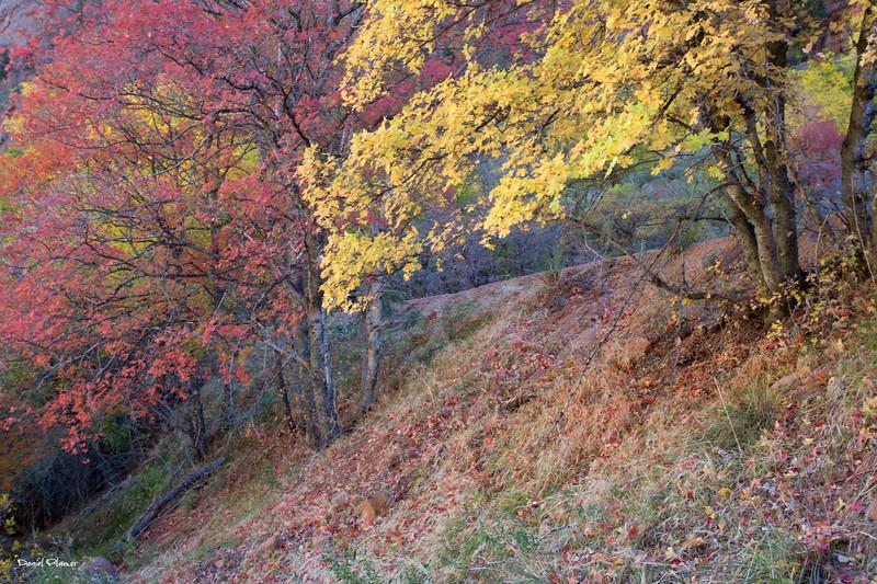 Zion Foliage