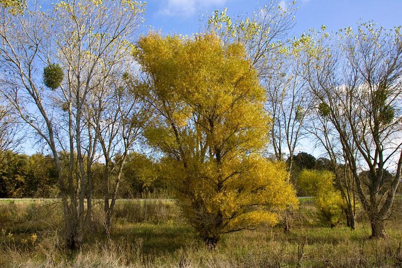 cosumnes_trees.jpg