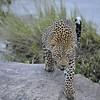 Leopard on the rocks in Africa