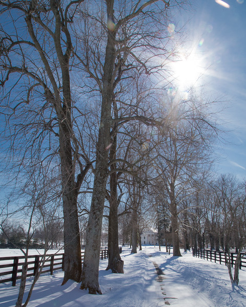 Spendthrift Farm 2.17.15. (pay per use image)
