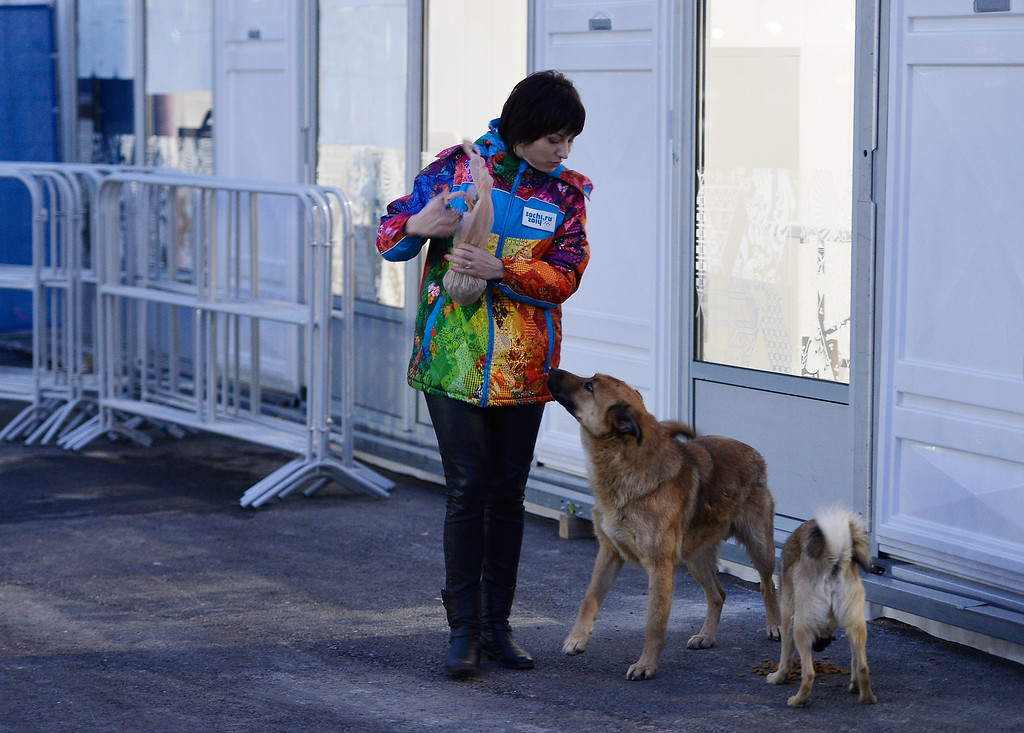 . A volunteer feeds some stray dogs ahead of the Sochi 2014 Winter Olympics on February 5, 2014 in Sochi, Russia.  (Photo by Pascal Le Segretain/Getty Images)