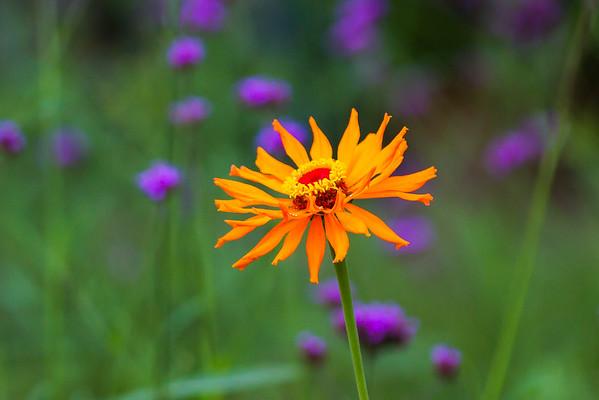 unknow flower-50