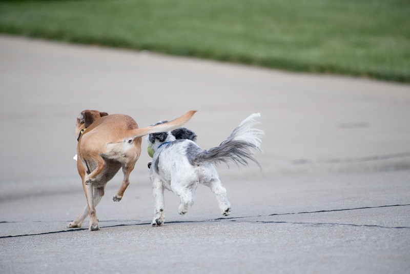 LuLu - Brady - Cooper Play Friends (25 of 109).jpg