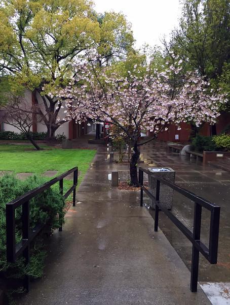 spring rain.jpg