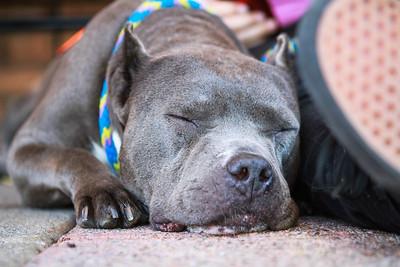 2012 Dog Squad Adoption at Unleashed