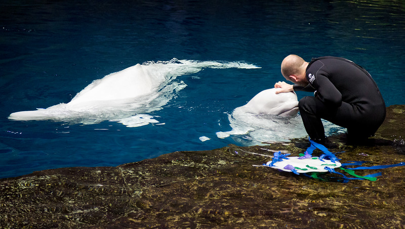 trainerwithtwobelugawhales.jpg