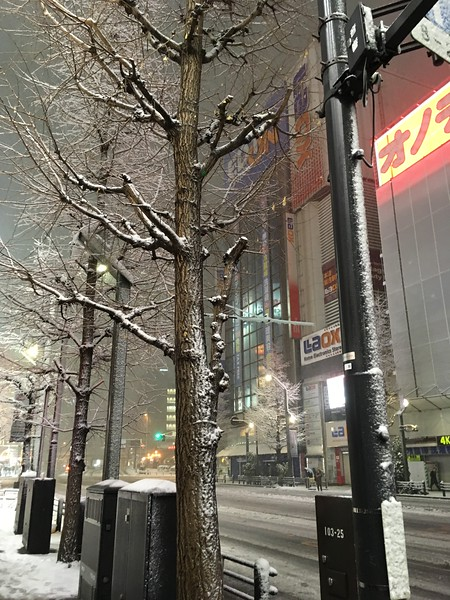 Snowy trees in Akiba