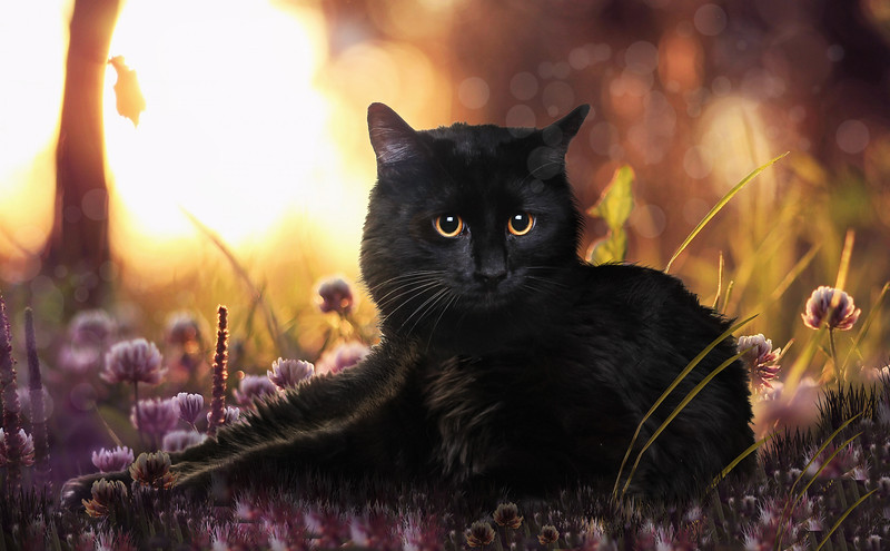 chat-noir5.jpg