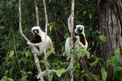 Madagascar, 2007
