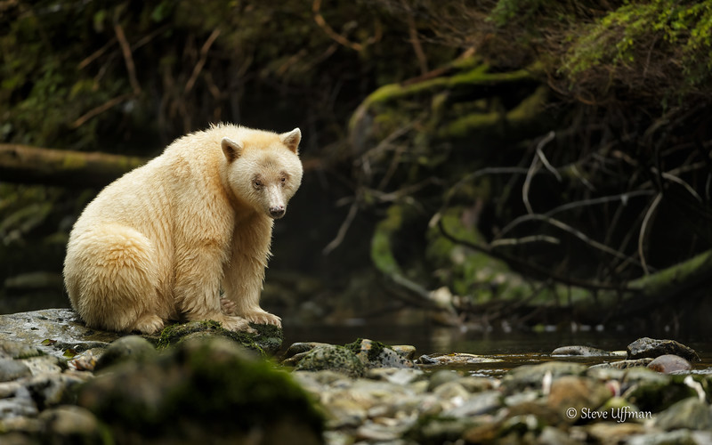 20150930-_G7Q8817Spirit-Bears-British-Columbia-Edit - Copy.jpg