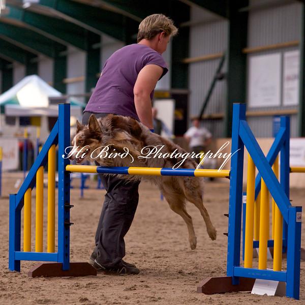 medium dog agility 1165.jpg