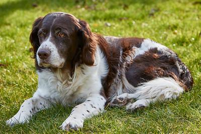 Monty in de zon