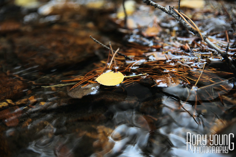LeavesWater.jpg