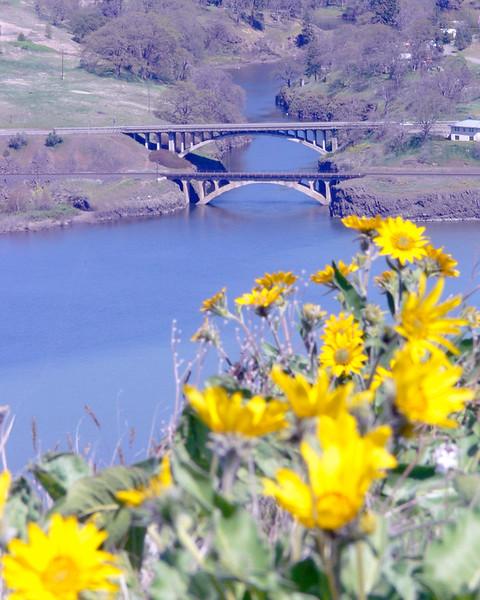 wildflowers24.jpg