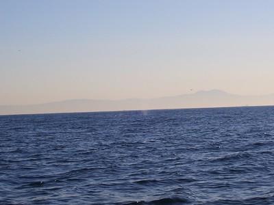 Catalina 2007