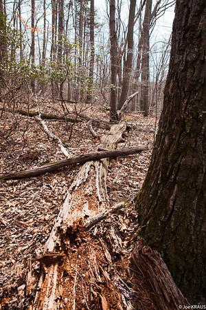 Hiking - Woods