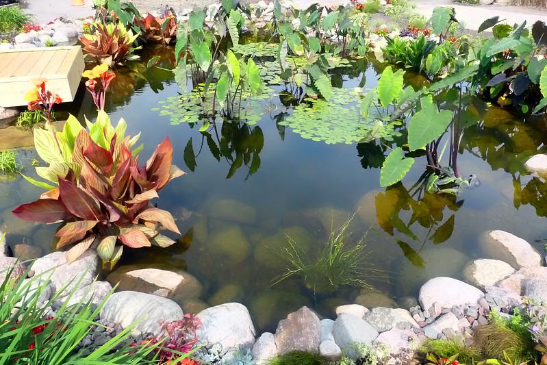 Lily pond 2.jpg