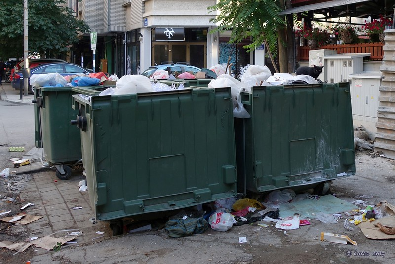 05 Skopje, street cat.jpg