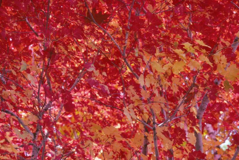 Fall 1984 - 002.jpg