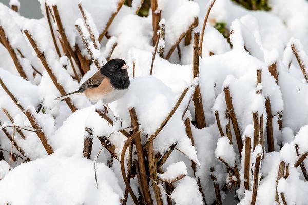 2019 02-09 Backyard birds