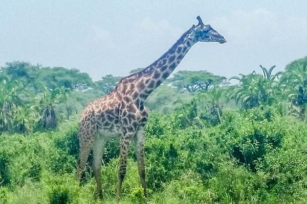 Best of Tanzania